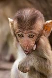 The Monkey Baby