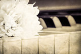 Close-up of piano keyboard and flower in monochrome vintage look