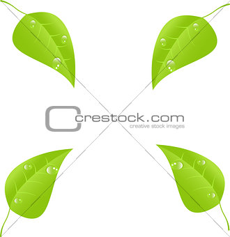 Green leaf with space for text