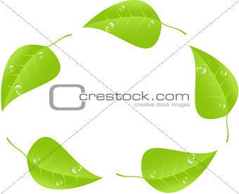 Green leaf with space for text. Vector