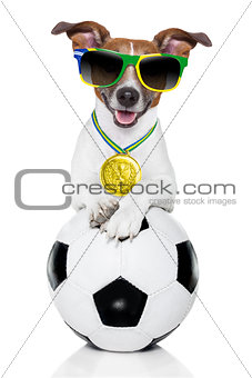 brazil  fifa world cup  dog