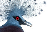 Head of Victoria Crowned Pigeon - Goura victoria