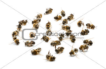Group of dead bees, isolated on white