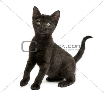Black kitten sitting, looking up, 2 months old, isolated on whit