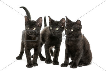Group of three Black kittens looking in the same direction, 2 mo