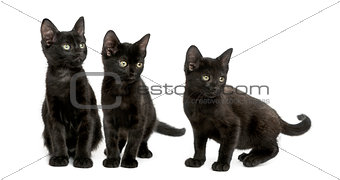 Three Black kittens looking away, 2 months old, isolated on whit