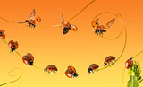 Composition of a cloud of ladybirds on a orange gradient backgro