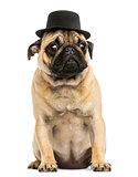 Front view of a Pug puppy wearing a top hat, sitting, 6 months o