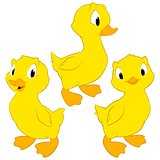 Cartoon Baby Ducks