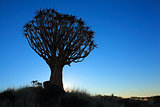 Quiver tree silhouette