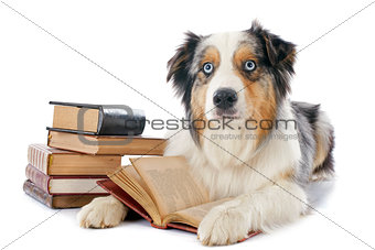 australian shepherd and books