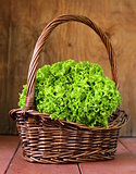 great fresh organic green lettuce on a wooden background