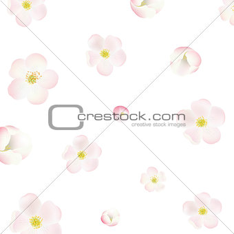 Apple Tree Flowers Background