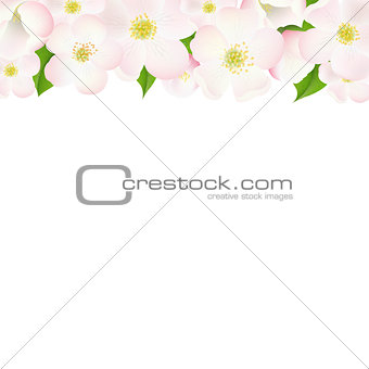 Apple Tree Flowers Border