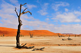 Lonely tree skeleton, Deadvlei, Namibia