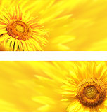 Banners with sunflowers