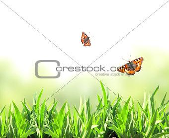 Green grass and butterflies