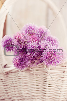 Fresh chives flower