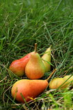 pears lying on the grass