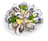 dozen oysters on white plate