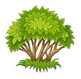 Bush with green leaf