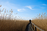 Walking in the reeds