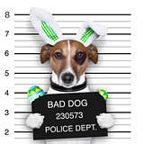 easter mugshot dog