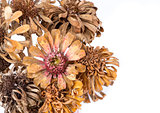 Dried Zinnias