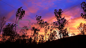 Australian sunset gum tree silhouette