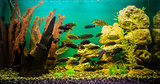 Tropical freshwater aquarium with fishes