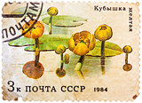 Post stamp printed in USSR (CCCP, soviet union) shows image of w