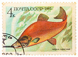 Post stamp printed in USSR (CCCP, soviet union) shows oncorhynch