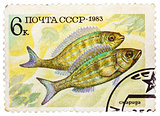 Post stamp printed in USSR (CCCP, soviet union) shows Perciforme