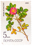 Stamp from the USSR (Scott 2008 catalog no. 5381) shows a prickl