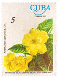 "Stamp printed by Cuba shows Allamanda flowers ""Allamanda cathart"