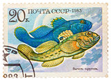Stamp printed by Russia, shows fish, Neogobius fluviailis