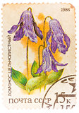 Stamp printed by Russia, shows flower, Clematis integrifolia