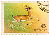 Stamp printed by Russia, shows Goitered gazelle