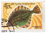 Stamp printed by Russia, shows underwater fish flounder