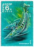 Stamp printed by Russia, shows White-blooded pikes
