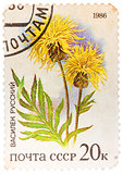 Stamp printed by Russia, shows wild flower Russian knapweed