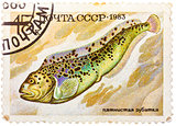 Stamp printed by Russia (USSR), shows fish, Anarhichas minor
