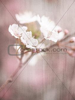 Blooming tree vintage background