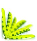 Green peas border