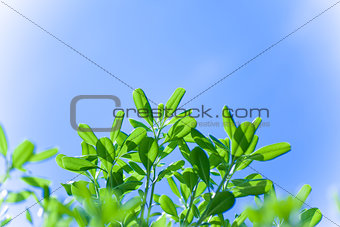 Green tree over blue sky