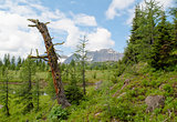 Dead Tree in a Mountain Valley