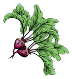 Beets vintage woodcut illustration