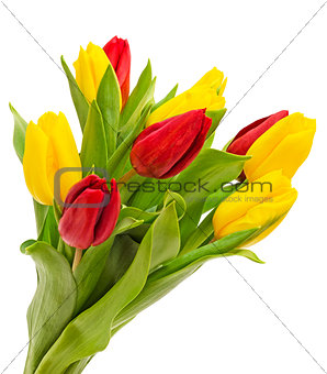 Bouquet of tulips isolated
