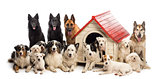 Large group of dogs in and surrounding a kennel against white background