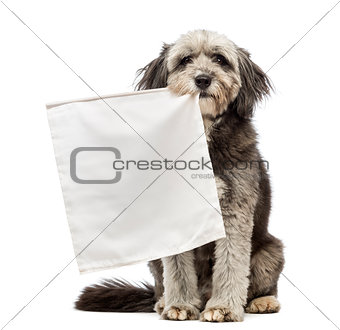 Crossbreed, 4 years old, sitting and holding a flag white in its mouth in front of white background